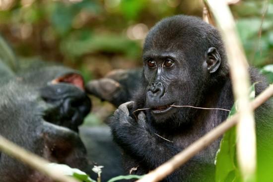 Voyage au Gabon sur mesure