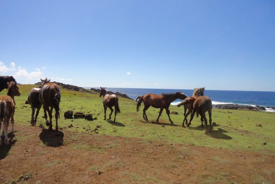 Voyage à l'île de Pâques sur mesure