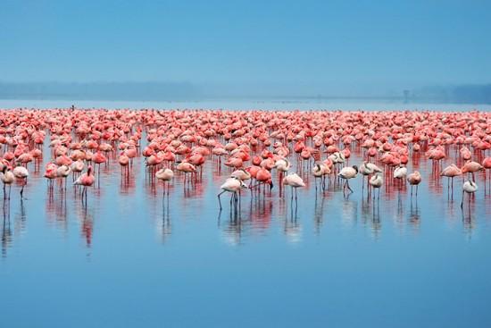 Voyage au Kenya sur mesure