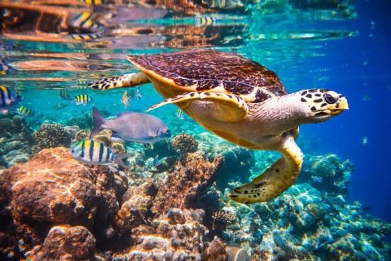 Voyage aux Maldives sur mesure