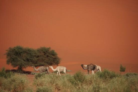 Voyage au Mali sur mesure