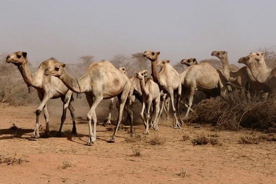 Voyage en Somalie sur mesure