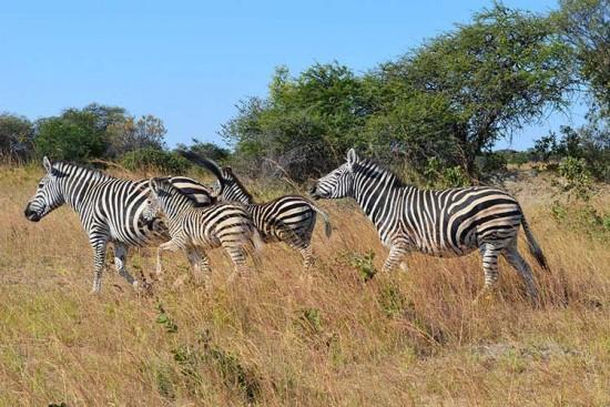 Voyage au Zimbabwe sur mesure