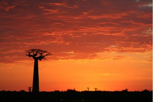 Les plus beaux paysages de Madagascar