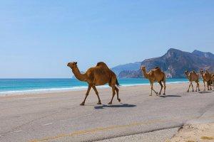 Liberté Omanaise