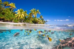 polynesie_francaise_shutterstock_BlueOrange-Studio
